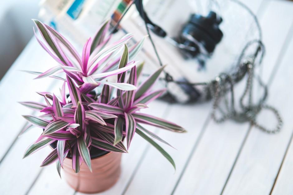 Planten in woonkamer