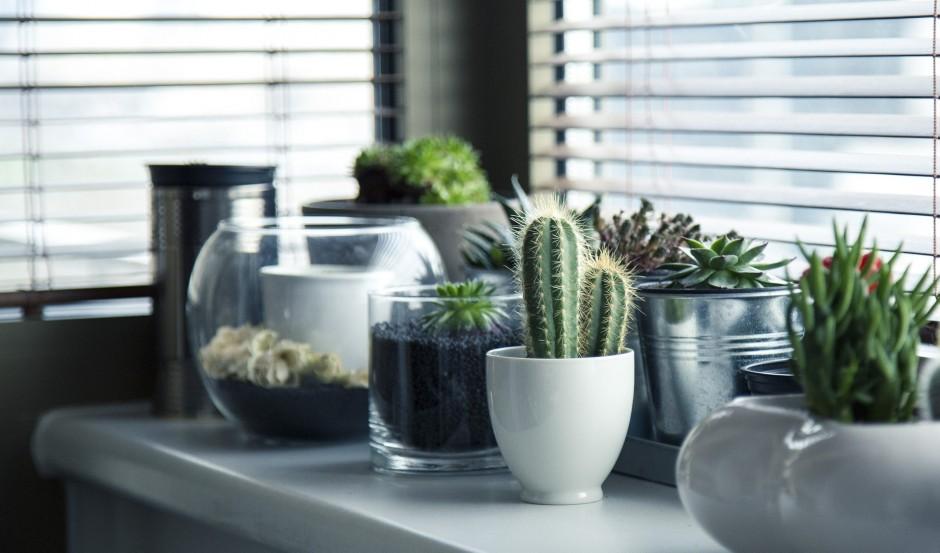 Sfeervol met planten in je woonkamer - Simply at HomeSimply at Home