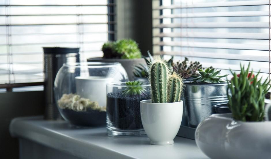 Planten In Woonkamer : Sfeervol met planten in je woonkamer simply at homesimply at home