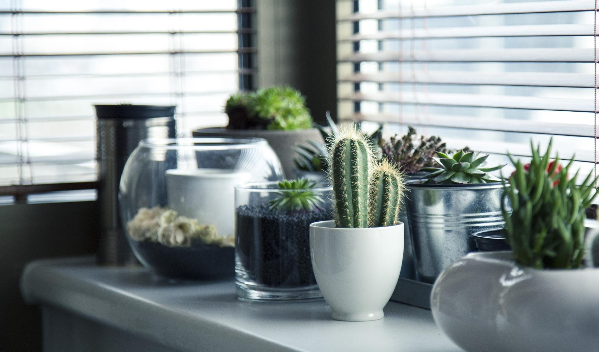 Sfeervol met planten in je woonkamer - Simply at HomeSimply at Home